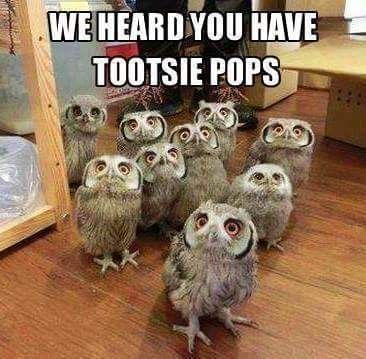 Mr Owl, How Many Licks does it take to get to the Tootsie Roll Center of a Tootsie Pop?