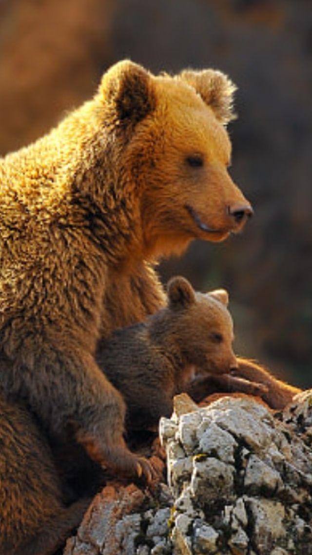 Mamma and Cub.