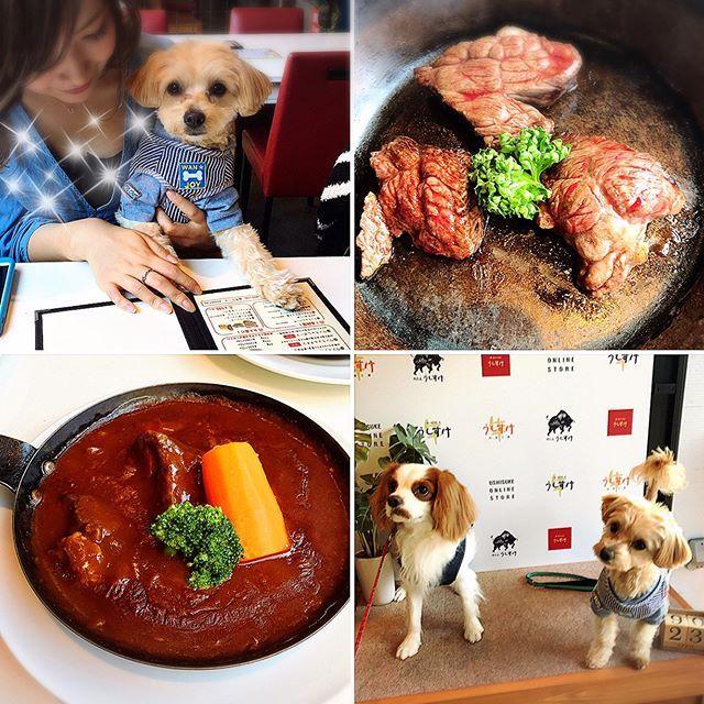 お台場でお肉たべたよ🍖 @ushisuke.yakiniku  僕が行ったのは、BISTOROの方だけどね‼️ . . . お友達の @__ericdayo と遊んだんだ💓 エリック🐶にたくさんお尻匂い嗅がれたよ🤔💓 . . . 初めての海は、波が怖かったよ💦💦💦 お台場、お友達🐶たくさんいたよ🍀 . . .  mama👩🏼がお台場に住みたいって言い始めてて、papa👨🏽がまた頭かかえてたよ‼️ . . . エリック🐶また遊ぼうね💓 . . . #愛犬 #愛犬家 #dog #dog🐶 #dogstagram #まるぷー #マルプー #マルプー連合 #ミックス犬 #マルチーズ #トイプードル #オス #1歳  #パピー犬 #親バカ部 #わんこなしでは生きていけません会 #犬のいる暮らし #happylife❤️ #lovemydog #お台場 #お台場海浜公園 #うしすけ #肉ビストロうしすけ