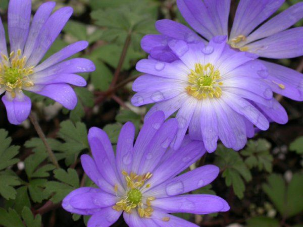 64 best gartenpflanzen images on Pinterest Flowers, Balcony and - gartenpflanzen