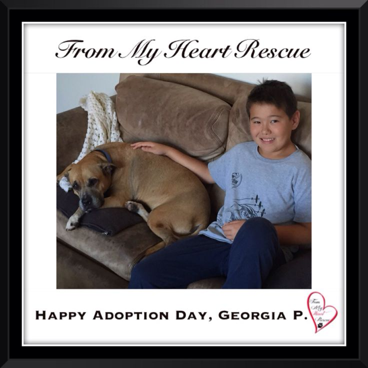 #Please ❤️+ #Pin #FMHR #FromMyHeartRescue #RescueWithoutBorders #SavingOneDogAtaTime ~ #Happy #Adoption #Day #GeorgiaPeach *Many thanks to Lee Anne, Jan, Dawn & Colin, for all their hard work behind the scenes. *Thank you❤️ *Info, Foster, Adoption, PayPal & e-transfer: frommyheartrescue@hotmail.com *Our Vets: Brock St. Animal Hospital/FMHR 905-430-2644 *Fundraising & Volunteering: FMHRfundraising@hotmail.com    *www.frommyheartrescue.com  *Find Us: Petfinder, FB, Twitter, IG, YT, G+