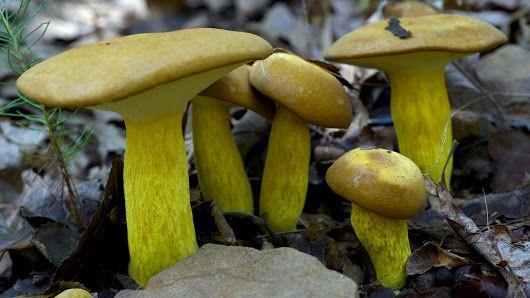 Mushrooms & Fungi - Google+