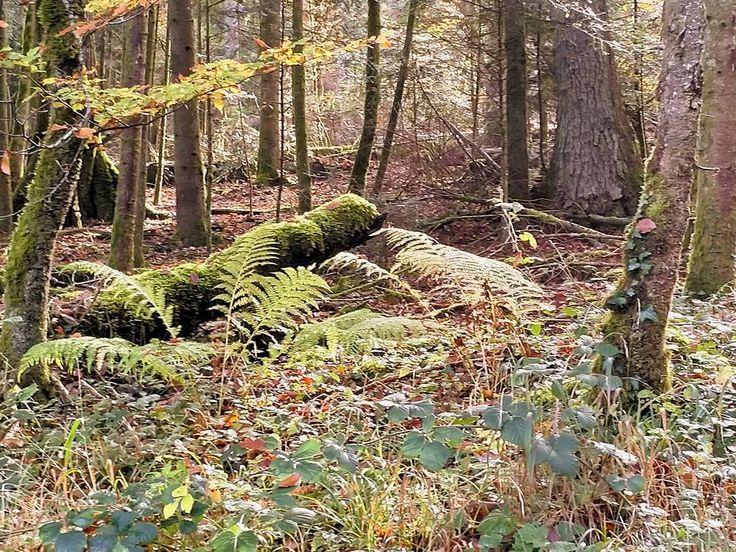 """Eindeutig in der Kategorie """"verwunschener Ort"""". #Naturmomente #Schwarzbubenland #Solothurn #Nunningen #Schweiz  #photooftheday #magicplaces #kraftorte #switzerland #switzerlandpictures #magicswitzerland  #nature #naturelovers #green #creek #forest #fall #autumn"""