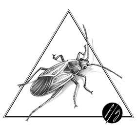 Bug tattoo Florence Gendre