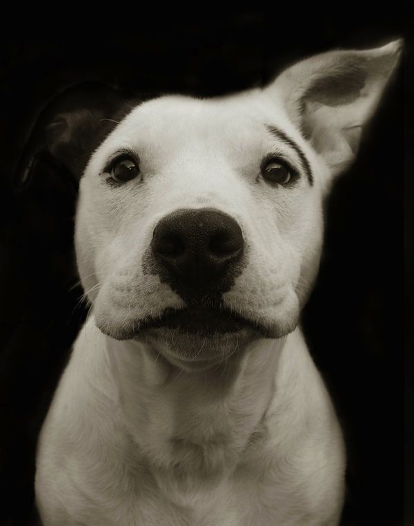 Shelter dog Portraits by Traer Scott