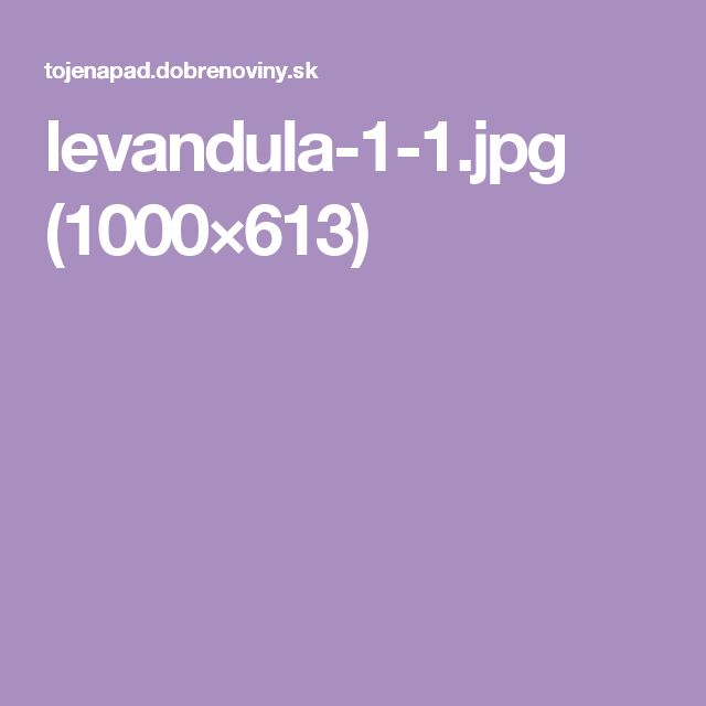 levandula-1-1.jpg (1000×613)