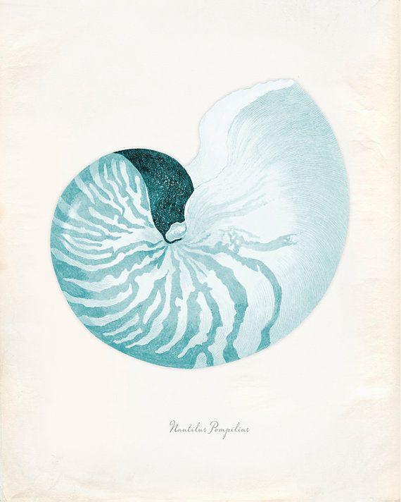 Vintage Sea Shell Nautilus Pompilius Print 8x10 P226 by OrangeTail, $14.00
