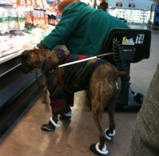 Even The Dogs In Walmart Dress Up I Thought I D Seen It