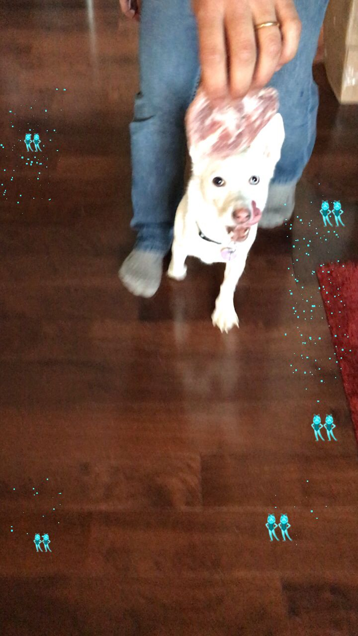 Dancing Luna   Follow lunatheminihusky on Instagram 🦄 🐶   #featuremyflip #featureme #cute #dog #dogs #ivehadthetimeofmylife #dancing #dogsofflipagram #dogsofinstagram #vibeschallenge #videooftheday #video ♫ Bill Medley