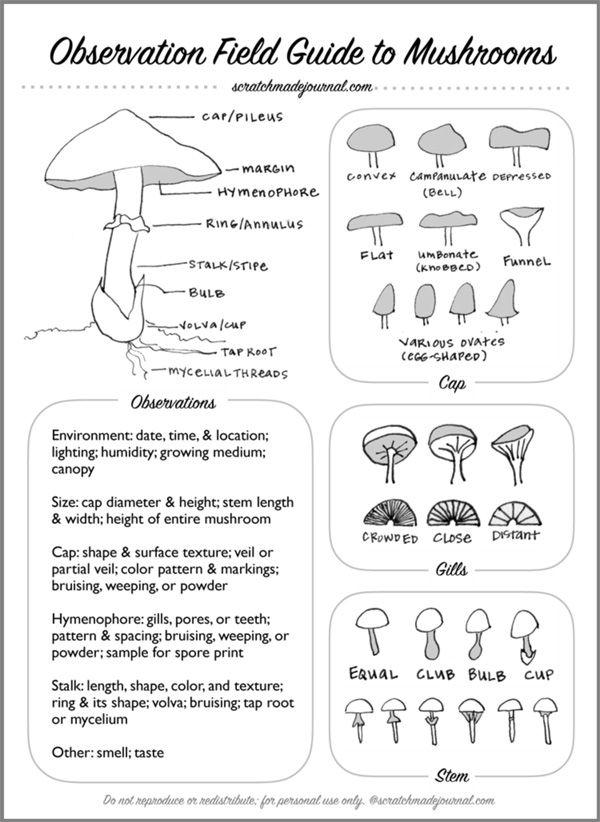 Free Printable! Mushroom Field Identification Guide - scratchmadejournal.com
