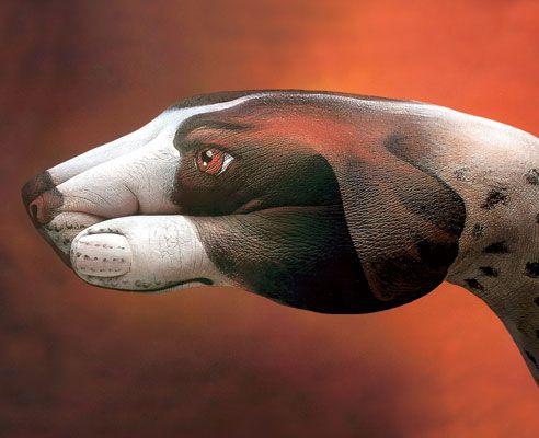 Artist Guido Daniele's Amazing Illusions