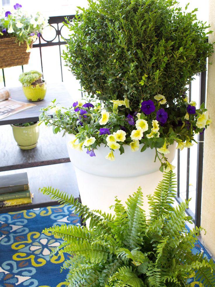 17 melhores imagens sobre folhas buxinho no pinterest jardins cercas vivas e design do jardim - Small outdoor space ideas pict ...