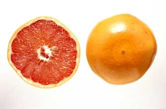 Woman's Own Egg and Grapefruit Diet food plan - goodtoknow
