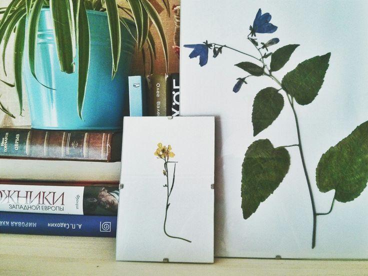Гербарий Колокольчика и Сурепки в интерьере. Самые простые цветы получаются интереснее всего!  #herbarium #гербарий #ботаника #botanic #сухоцветы #driedflowers #pressedflowers #decor #декор