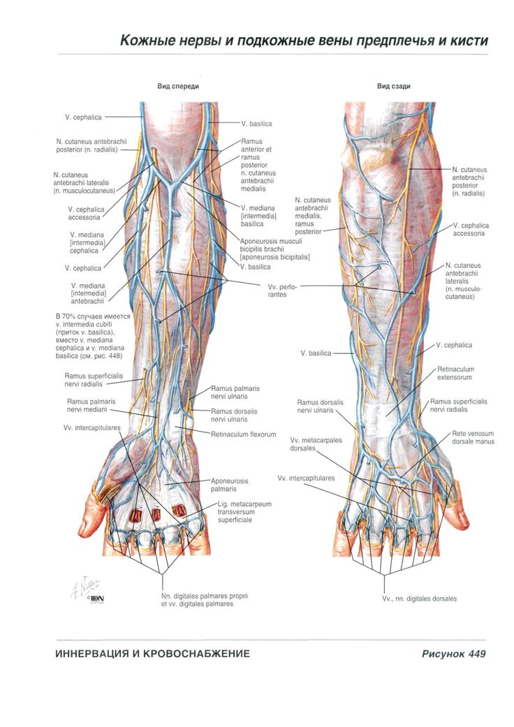 The 21 best Anatomia images on Pinterest | Medical science, Medicine ...