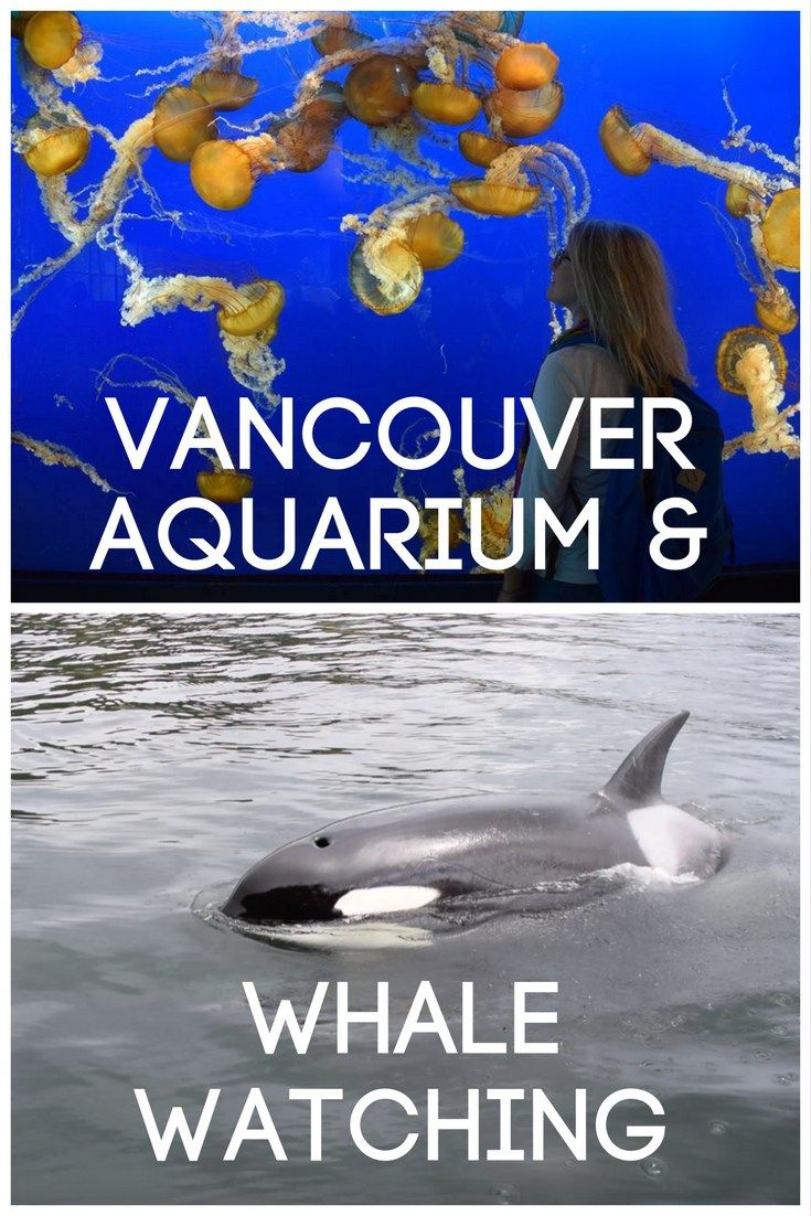 Vancouver Aquarium & Whale Watching in Vancouver, Canada. Find out all there is to know about visiting the aquarium or going whale watching in Vancouver