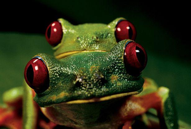 Tree Frogs :)