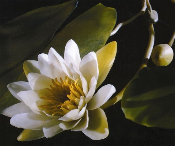Image result for glass flowers at harvard museum