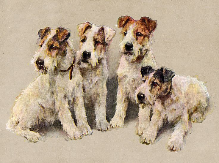 Wire FOX Terrier Group OF Dogs | eBay