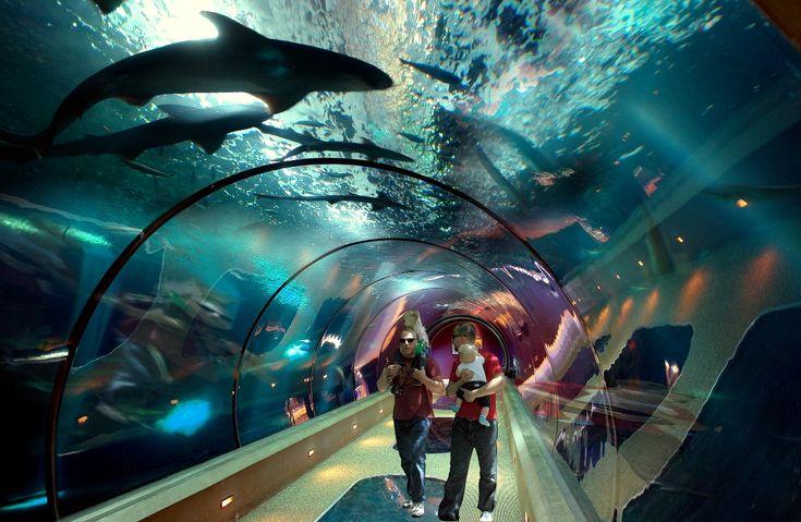 Google Image Result for http://newslincolncounty.com/wp-content/uploads/2011/04/oregon-coast-aquarium-shark-tube.jpg