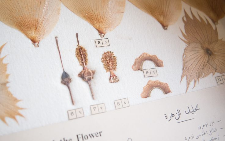 The Cotton Museum of Cairo - The Botany of Cotton The gem of modern cotton.