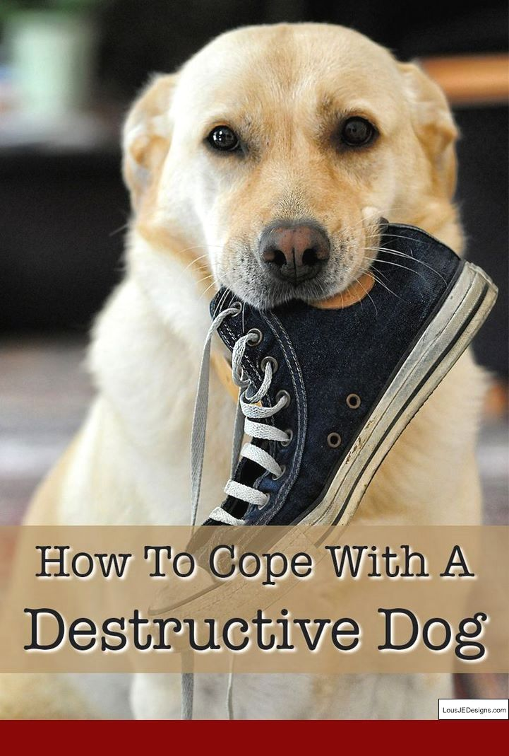 How To Train Dog Not To Bark At Cats And Pics Of How To Train Your