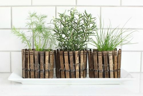 Clothing  pins herb planters.: Plants Can, Gardens Ideas, Indoor Herbs, Herbs Planters, Clothespins Planters, Flowers Pots, Herbs Gardens, Clothing Pin, Kitchens Herbs