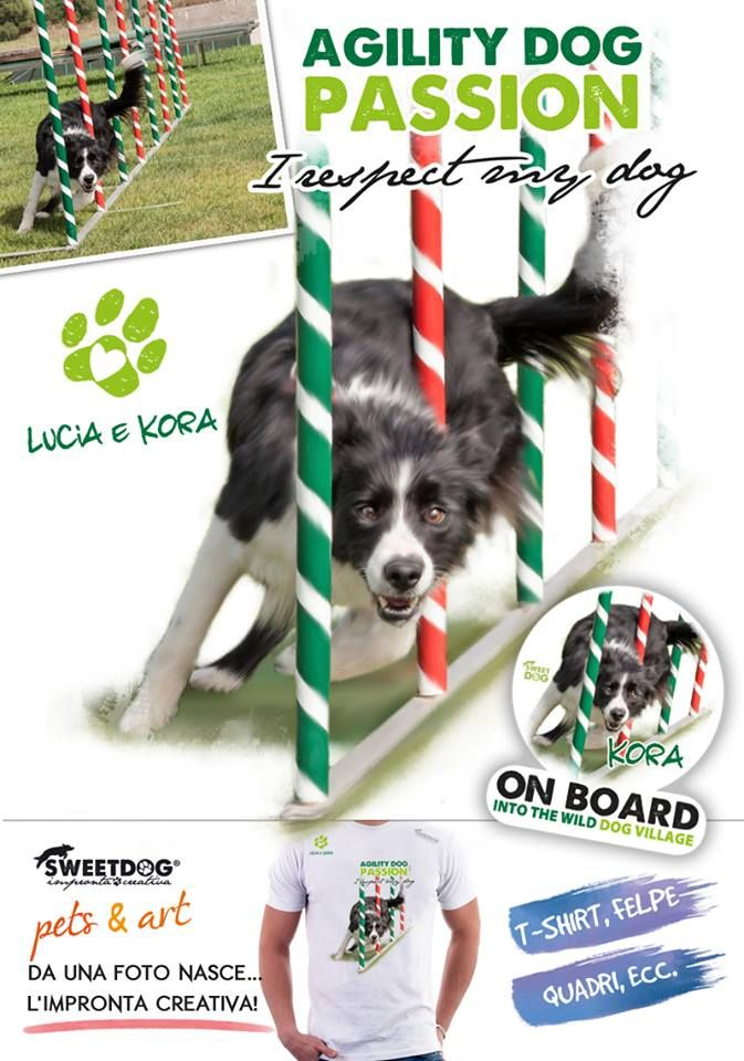 Dog: Kora (Border Collie)