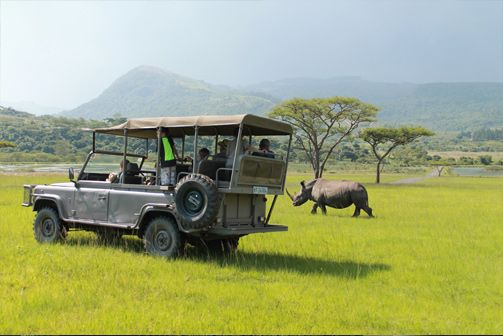 Up close and personal with Rhino. Gorgeous Game Drives at www.karkloofsafarispa.com