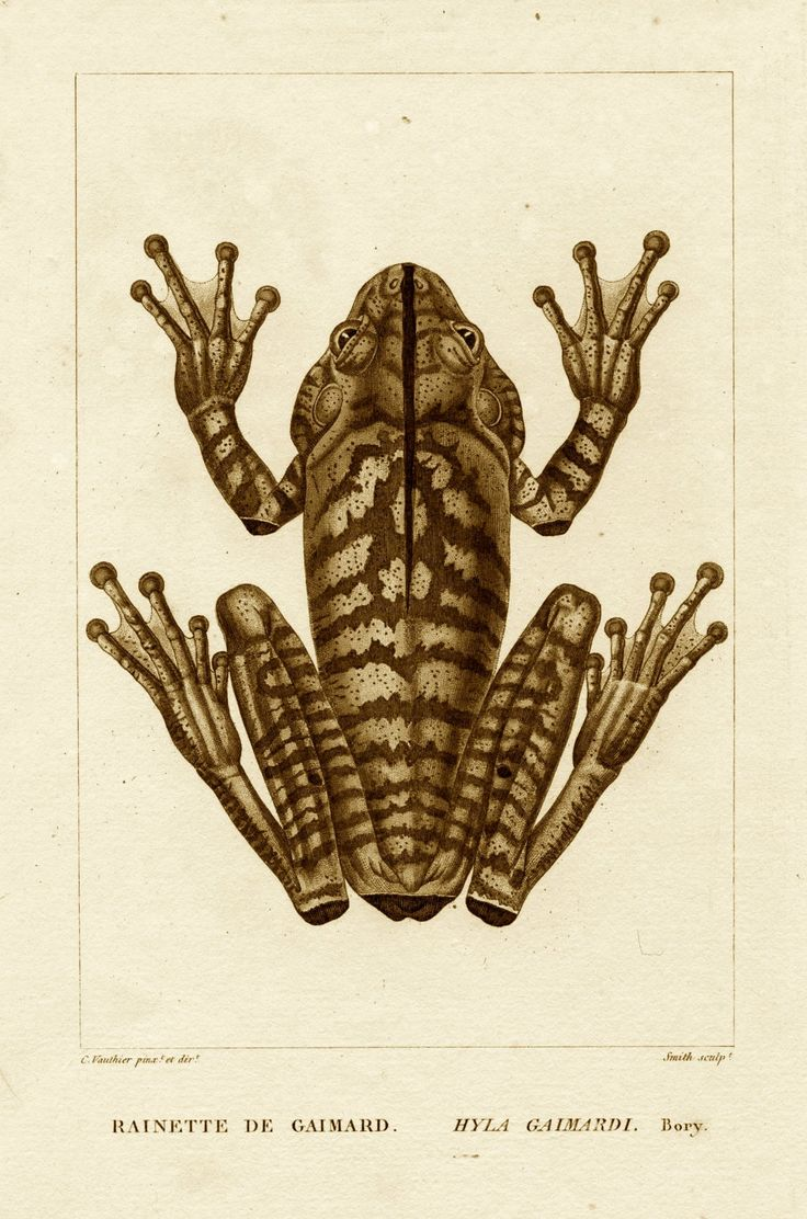 60 best Frogs and toads images on Pinterest | Frogs, Frog art and ...