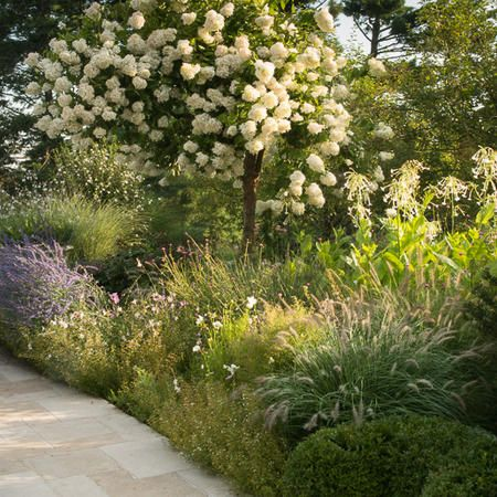 another view-- showing pee gee and Russian sage  View And Terrace Perennials