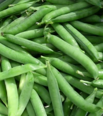 Pea – Progress Organic - heirloom