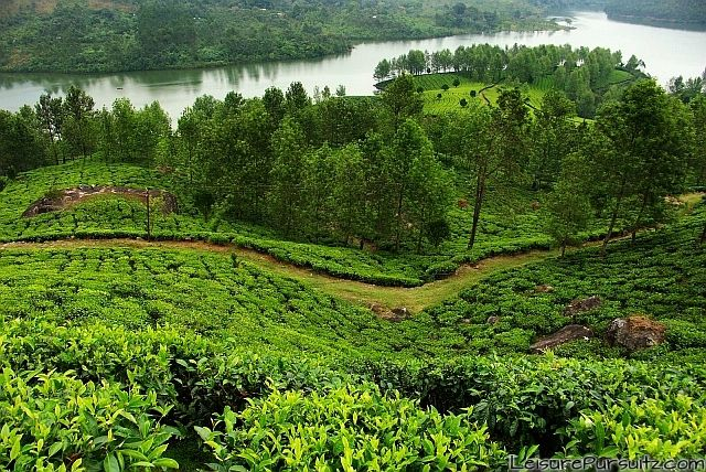 Teagardens at Chinnakanal