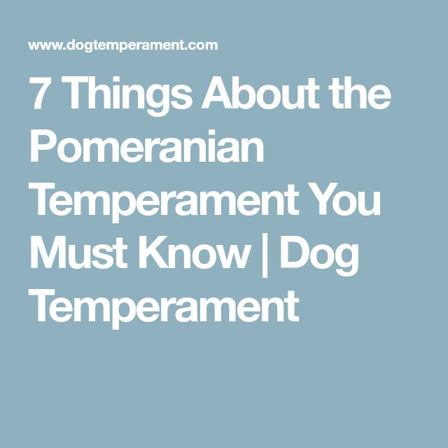 7 Things About the Pomeranian Temperament You Must Know | Dog Temperament