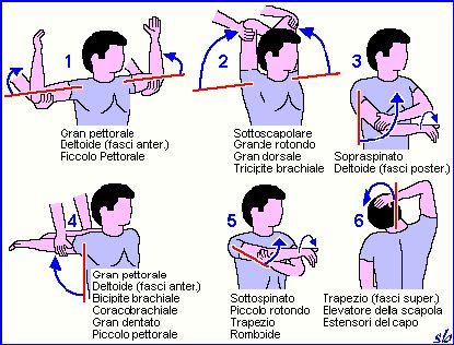 ginnastica per la colonna vertebrale - Cerca con Google