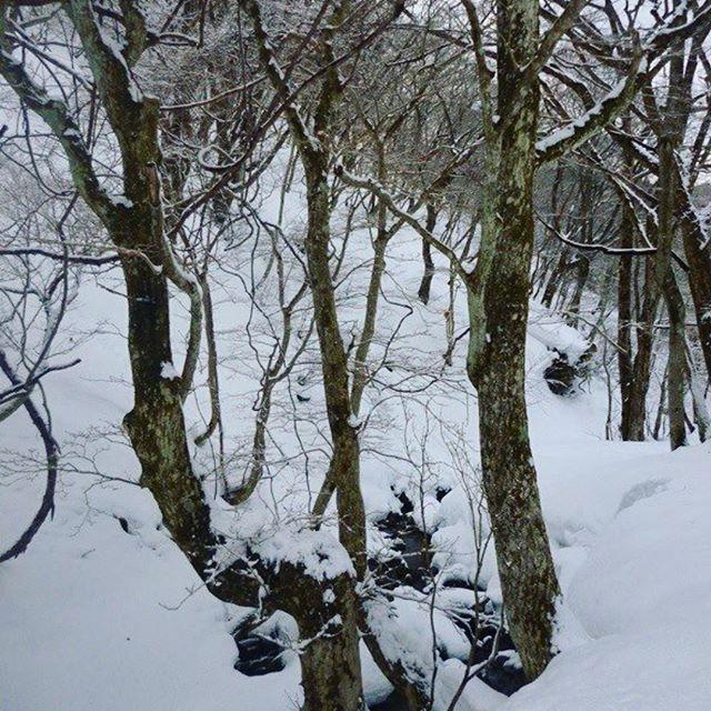 【miz_miz_ada】さんのInstagramをピンしています。 《Biwako valley, Shiga , Japan . . .  #mountain #forest#snow#trees#ice#snowboarding #ski#nature #naturelovers #natural #lovejapan #lovenature #discoverjapan #outdoor#自然 #スキー #スキー場#スノーボード#雪#山#森#木#アウトドア#ディスカバージャパン》