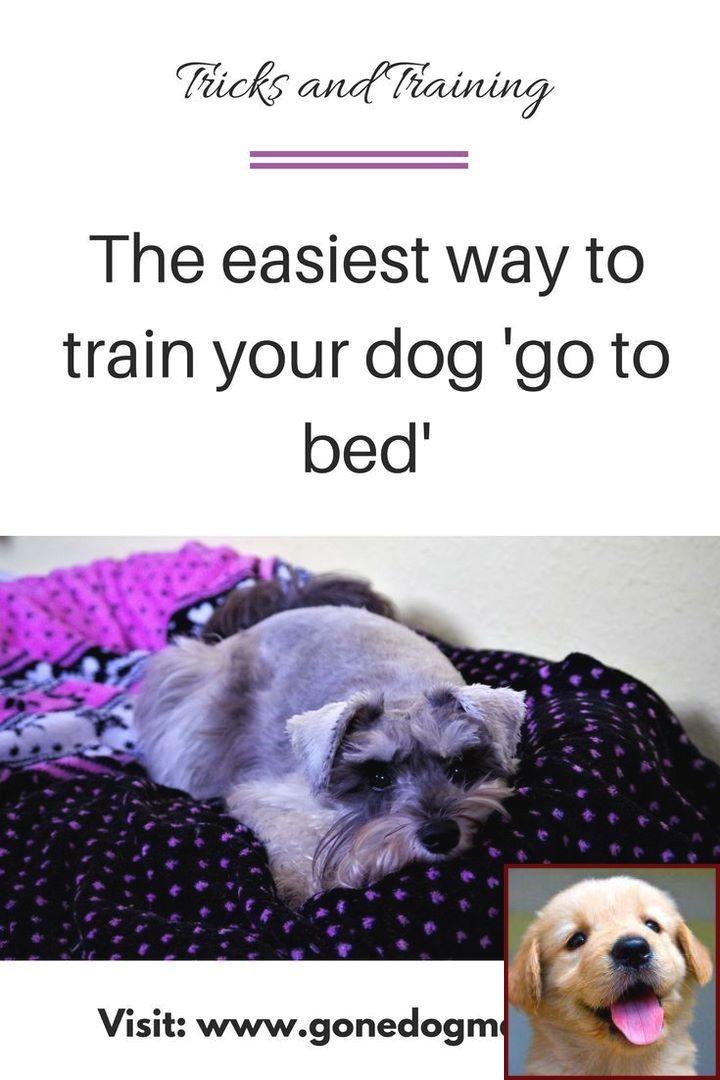 Dog Behavior Towards Humans And Training Courses Uk Online