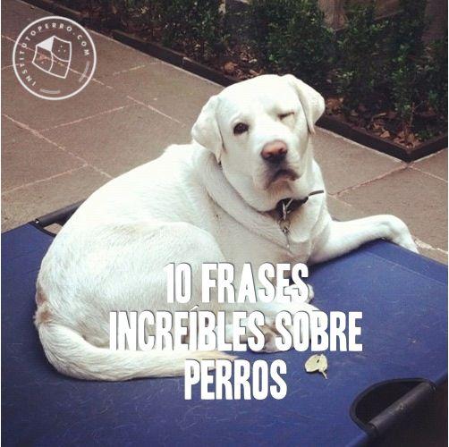 M s de 1000 ideas sobre frases sobre perros en pinterest - Es malo banar mucho a los perros ...