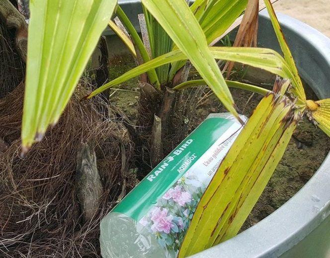 Arrosage Des Plantes 12 Astuces A Mettre En Place Pour Partir En