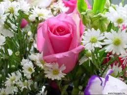 """Képtalálat a következőre: """"virágok"""""""