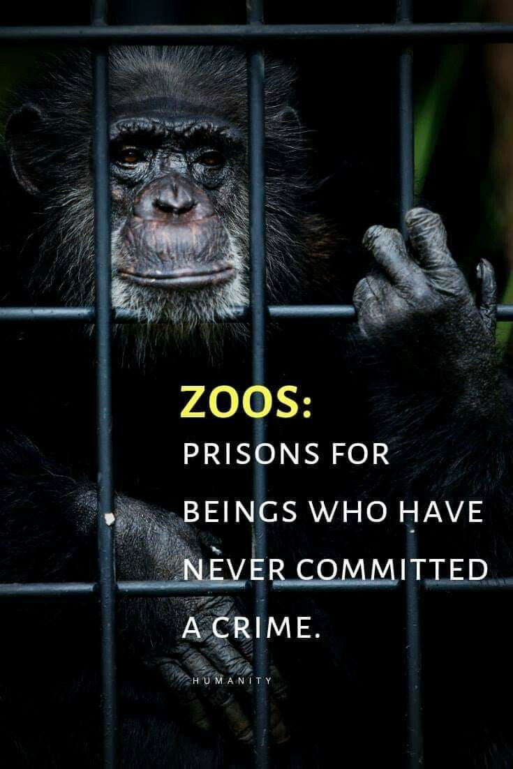 If You Go To Zoo S With Caged Animals You Are As Guilty As Those That Run Them Animals Animal Activism Animal Planet