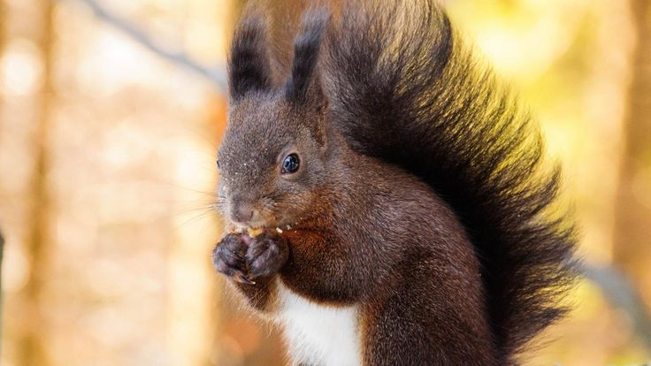 What Do Squirrels Like To Eat And Drink