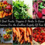 20 Best Fruits, Veggies & Herbs To Grow In Containers For An Endless Supply Of Free Food