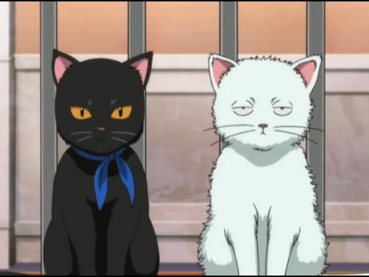 GINTAMA, Sakata Gintoki & Katsura Kotarou Transform is Cat, Kabukicho Stray Cat Blues, Episode 190 - 192