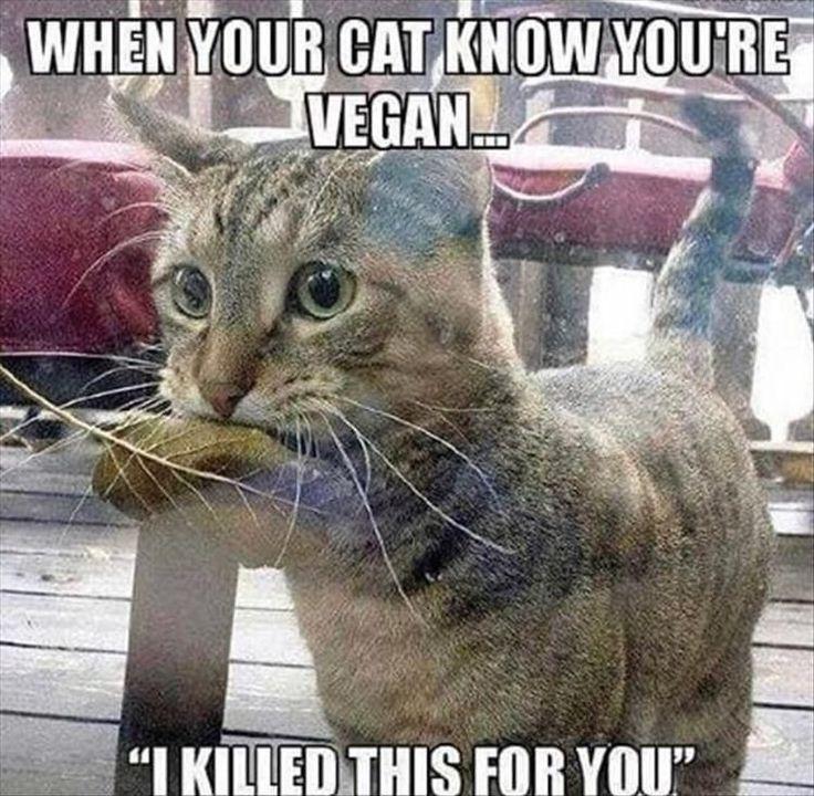 20 Bilder Funny Cat Memes, um dich an einem schlechten Tag aufzumuntern – Funny Cat Quotes #funnyca …   – Humor/Fies/Isso