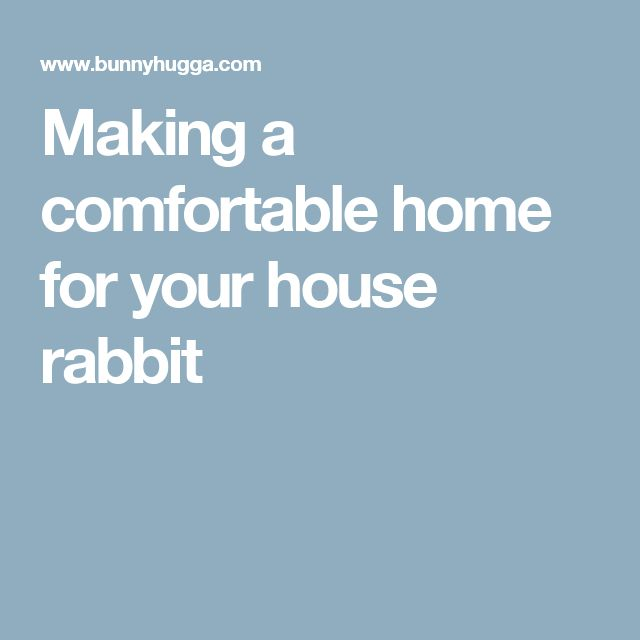 Making a comfortable home for your house rabbit