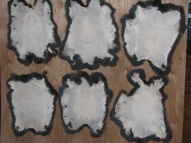 Rabbit Fur Hat tutorial by terrabytefarm, and advice on tanning rabbit pelts~homesteading