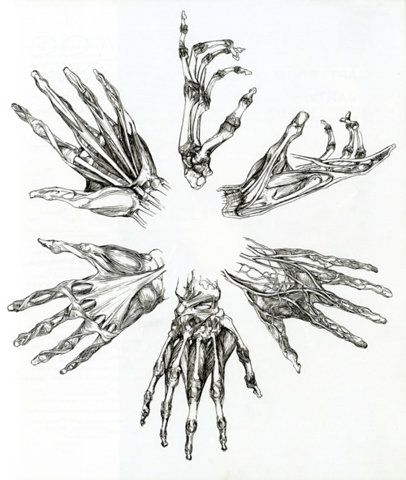 Hands - Medical Illustration. I love hands so much. By far my favorite part of the human body.