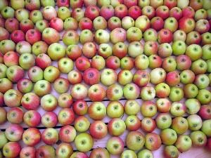 New Genetically-Modified Apples Won't Brown.  What?!?  The only people who are excited about this are the ones that don't give a s%$t about their health (or mine).  Read the comments on this story!  Hey farmer farmer, Put away that DDT, give me spots on my apples, leave me the birds and the bees (and nutrients)  Please!!!Hot Apples Cider, Good Food, Apple Recipes, Apples Butter, Love Games, Apple Cider, Apples Recipe, Canning Apples, Cooking Recipes
