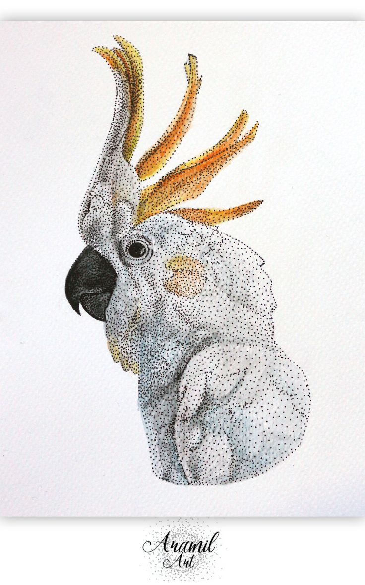 Cockatoo drawing, created by using about a thousand dots and colored with watercolour pencil. Art by Petra Jánosi. Come and check on FB. :) www.facebook.com/aramilart